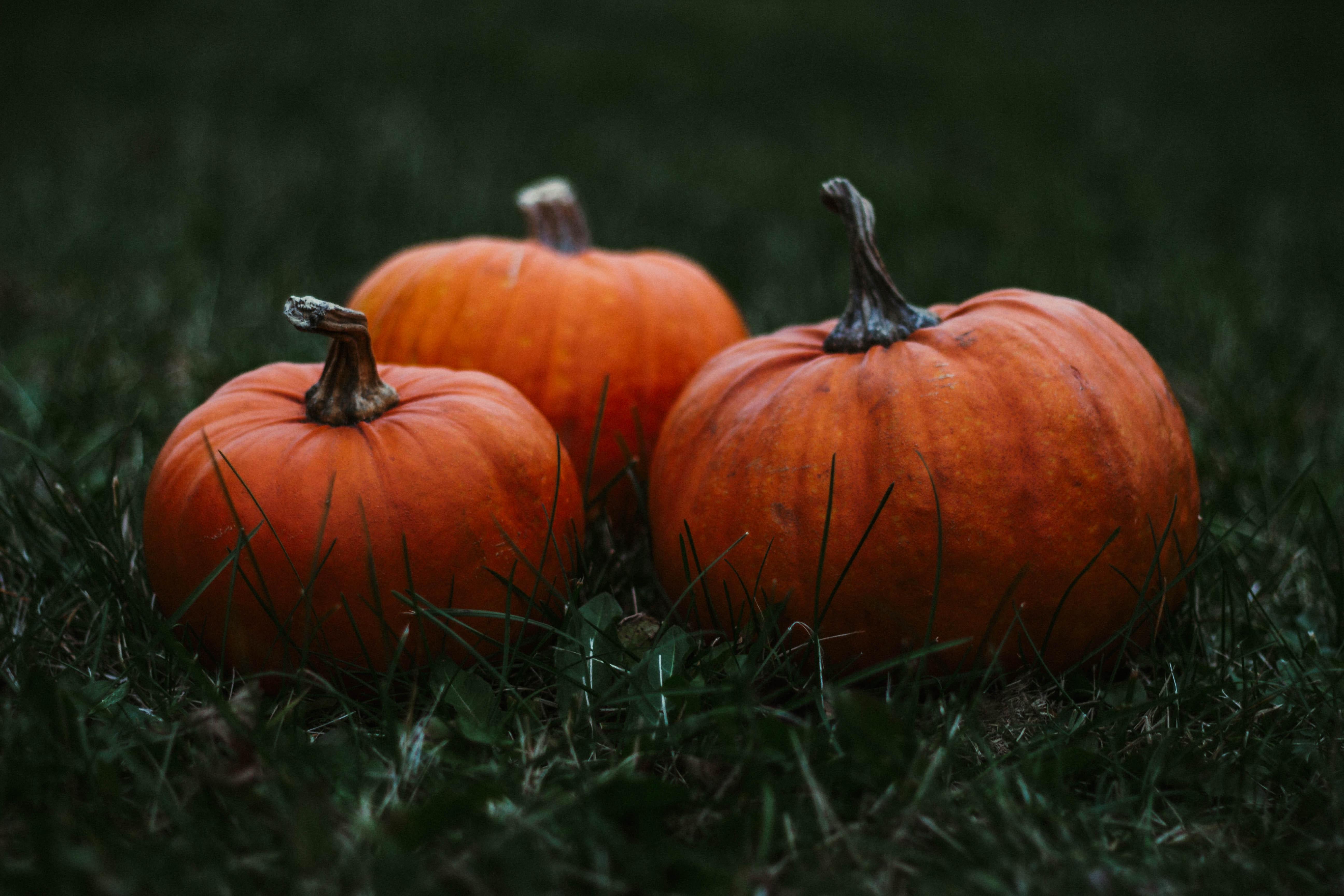 Ask Chef Donna: It's Pumpkin Season